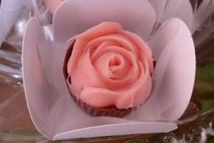 rosa-rosa-1024x575